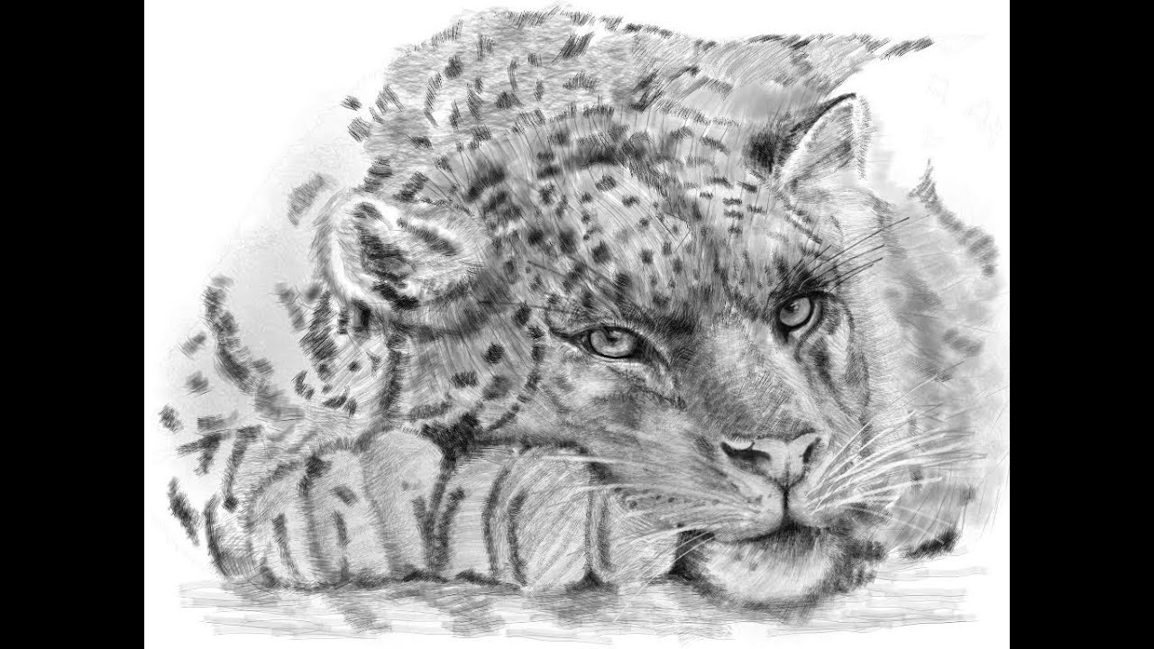 how to draw a snow leopard face snow leopard wip 2 by face reality on deviantart leopard face snow to draw how a
