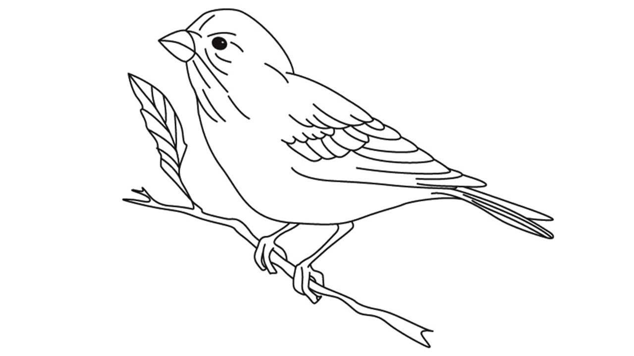 how to draw a sparrow bird step by step google image result for httpspaintingvalleycom step to bird sparrow by draw step a how