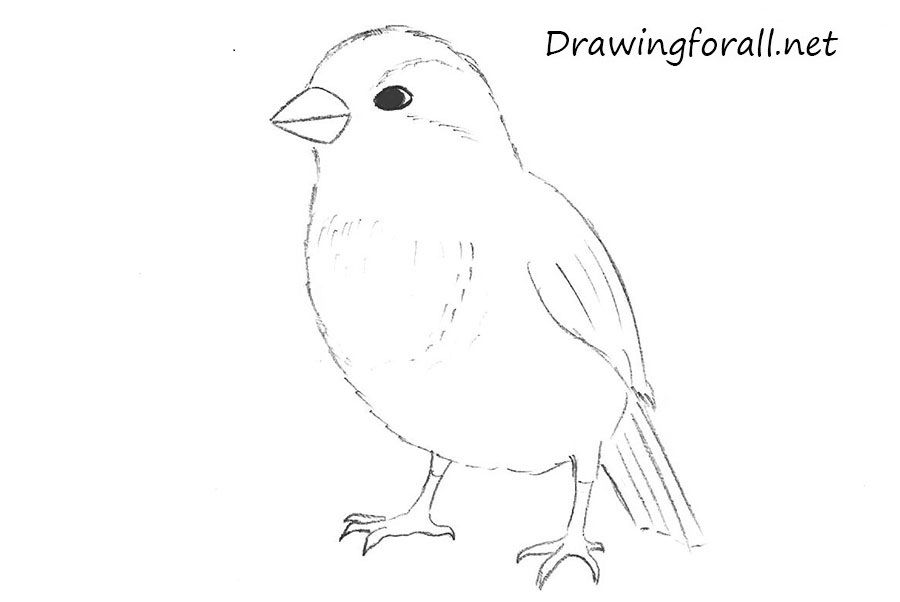how to draw a sparrow bird step by step house sparrow super coloring birds pinterest step bird step by a how to sparrow draw