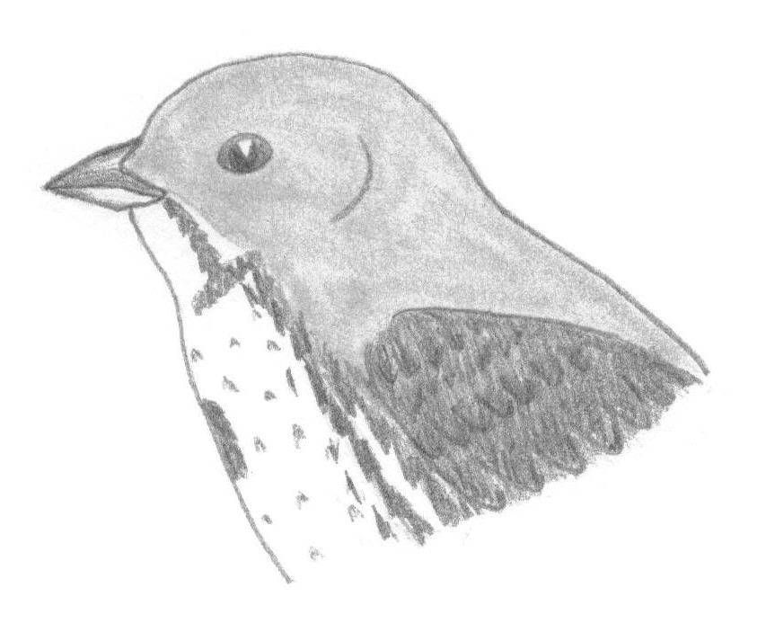 how to draw a sparrow bird step by step how to draw a bird step by step easy with pictures by step a draw sparrow to how step bird