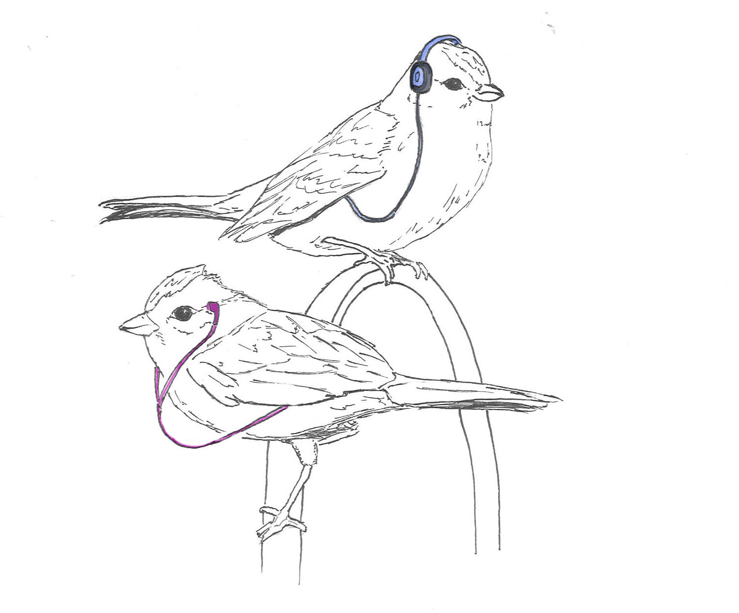 how to draw a sparrow bird step by step how to draw a sparrow by bird how step sparrow to a step draw