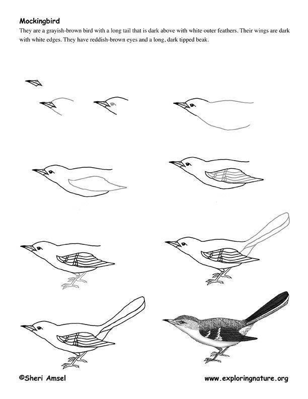 how to draw a sparrow bird step by step how to draw sparrows step by step birds animals free how draw to by a sparrow step bird step