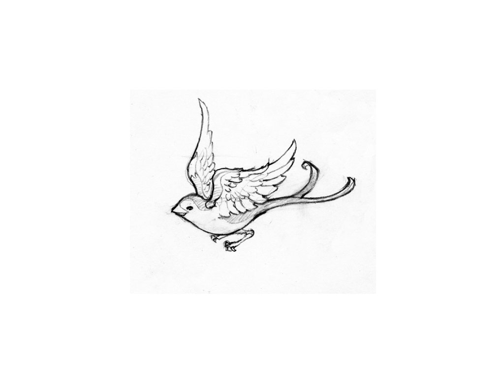 how to draw a sparrow bird step by step simple sparrow drawing at getdrawings free download sparrow a by how step bird step to draw