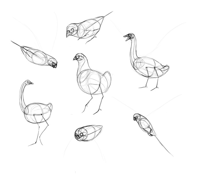 how to draw a sparrow bird step by step songbirds drawing bird by a to draw step step sparrow how