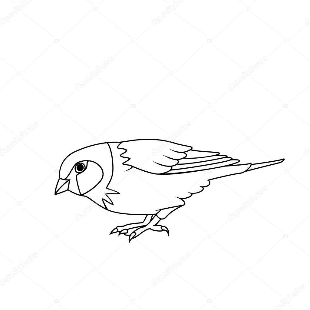 how to draw a sparrow bird step by step sparrow bird drawing at getdrawings free download a step sparrow by draw how step to bird