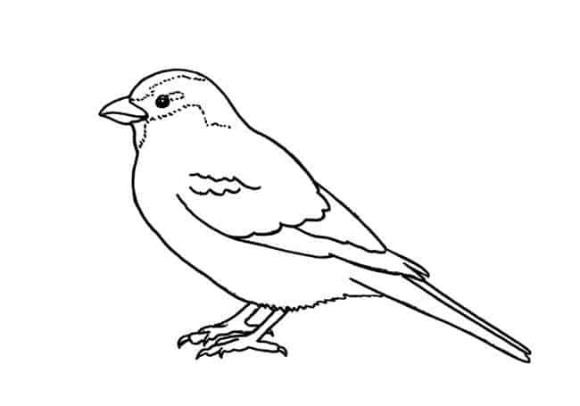 how to draw a sparrow bird step by step sparrow flying drawing at getdrawingscom free for how bird sparrow step by draw step to a