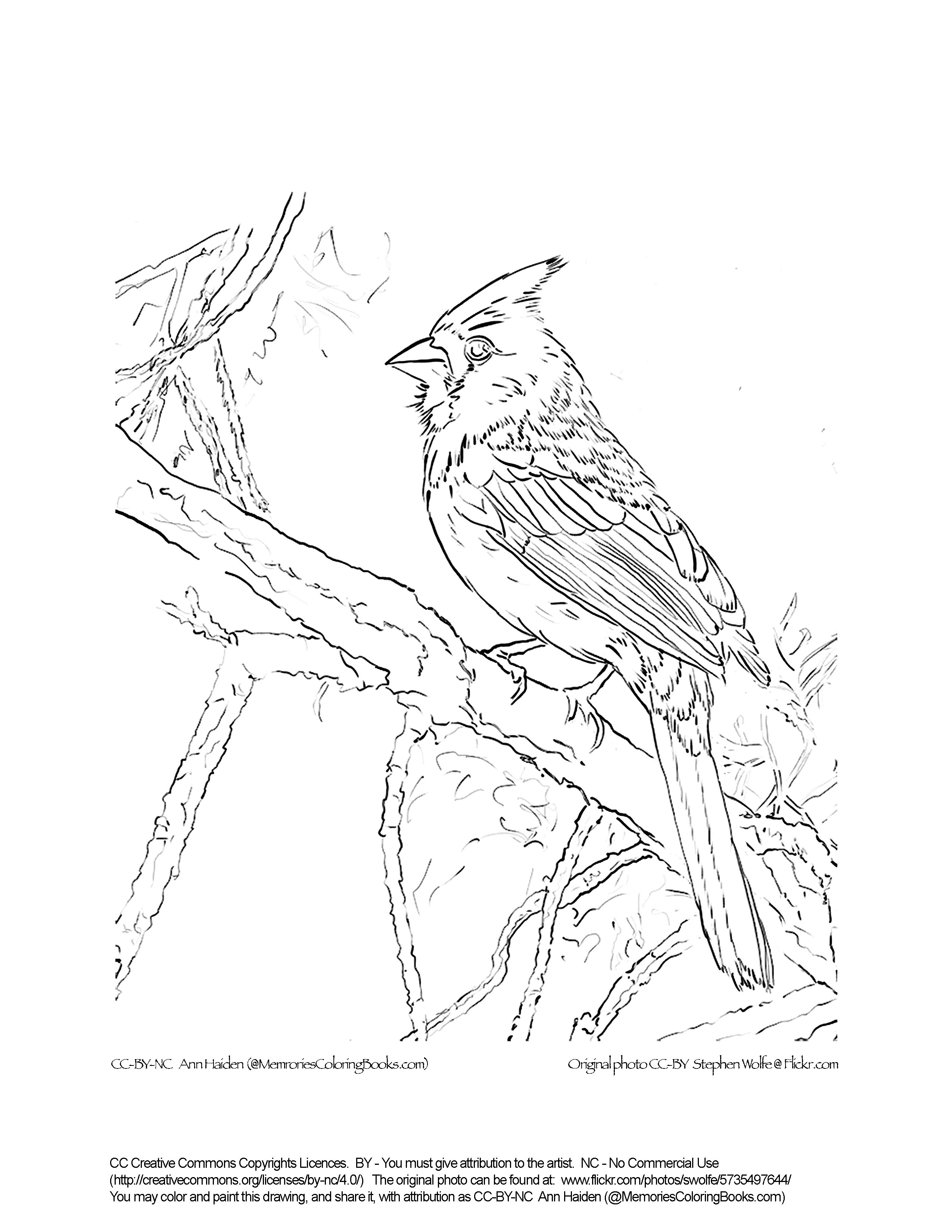 how to draw a sparrow bird step by step sparrow line drawing at getdrawings free download draw bird to a step step by sparrow how