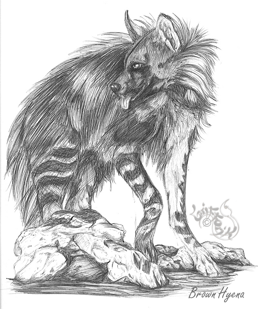 how to draw a spotted hyena brown hyena by grifforik on deviantart to hyena spotted how a draw