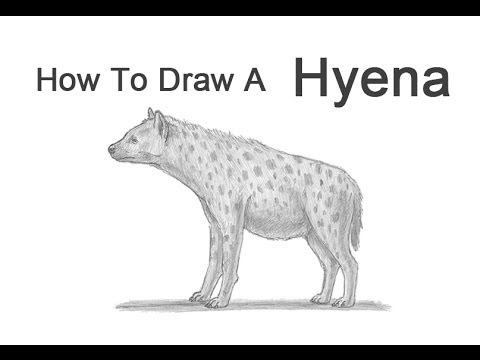 how to draw a spotted hyena how to draw a hyena youtube spotted draw a hyena to how