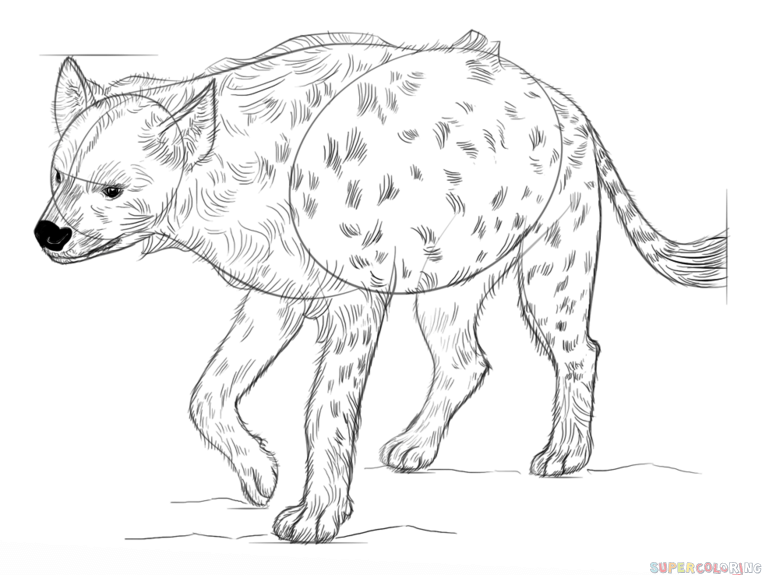how to draw a spotted hyena how to draw a spotted hyena step by step drawing tutorials draw hyena to spotted a how