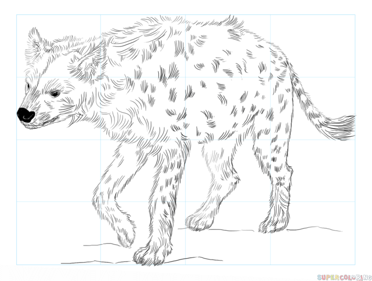 how to draw a spotted hyena how to draw a spotted hyena step by step drawing tutorials to draw how hyena spotted a