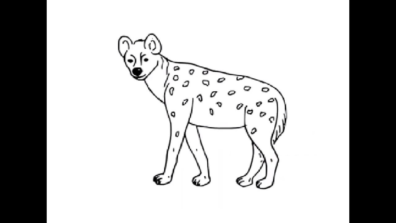 how to draw a spotted hyena how to draw spotted hyena drawing by kids step by step hyena how spotted to a draw