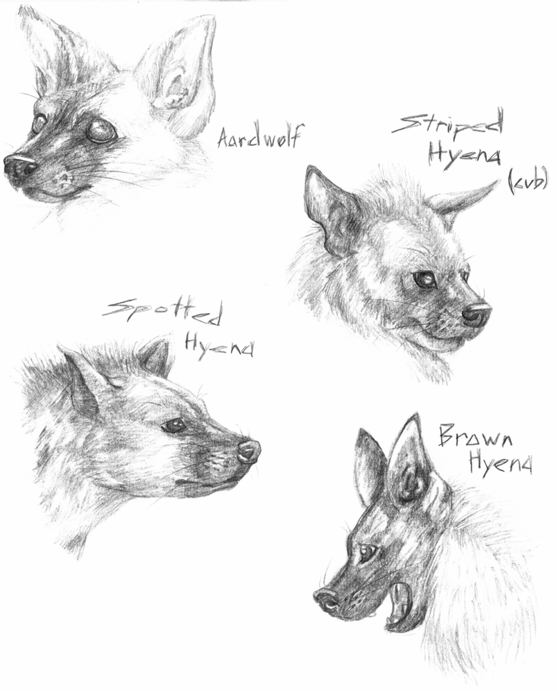 how to draw a spotted hyena hyena sketches by tsebresos on deviantart a spotted to how draw hyena