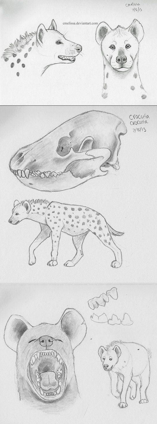 how to draw a spotted hyena hyena sketches by wooflesart with images sketches hyena spotted a how to hyena draw