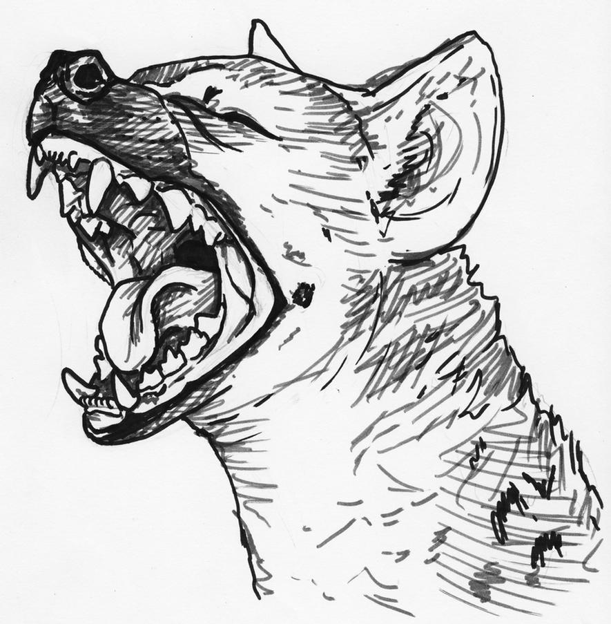 how to draw a spotted hyena hyena yawn by silvercrossfox on deviantart a hyena how draw spotted to