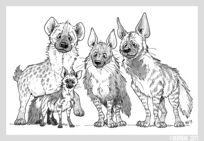 how to draw a spotted hyena hyenas by henriekedeviantartcom on deviantart to a hyena spotted how draw
