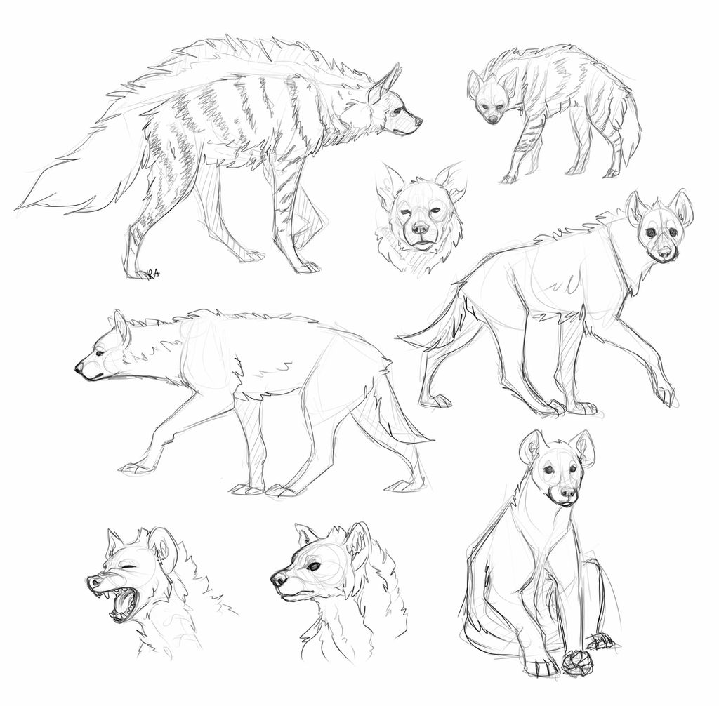 how to draw a spotted hyena hyenas by red anteater on deviantart draw a spotted how hyena to