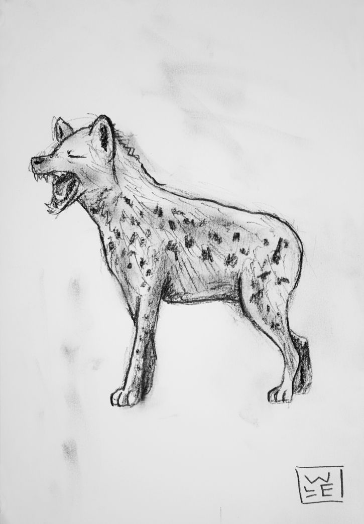 how to draw a spotted hyena laughing hyena graphite drawing will lineberger eskridge to a draw hyena how spotted