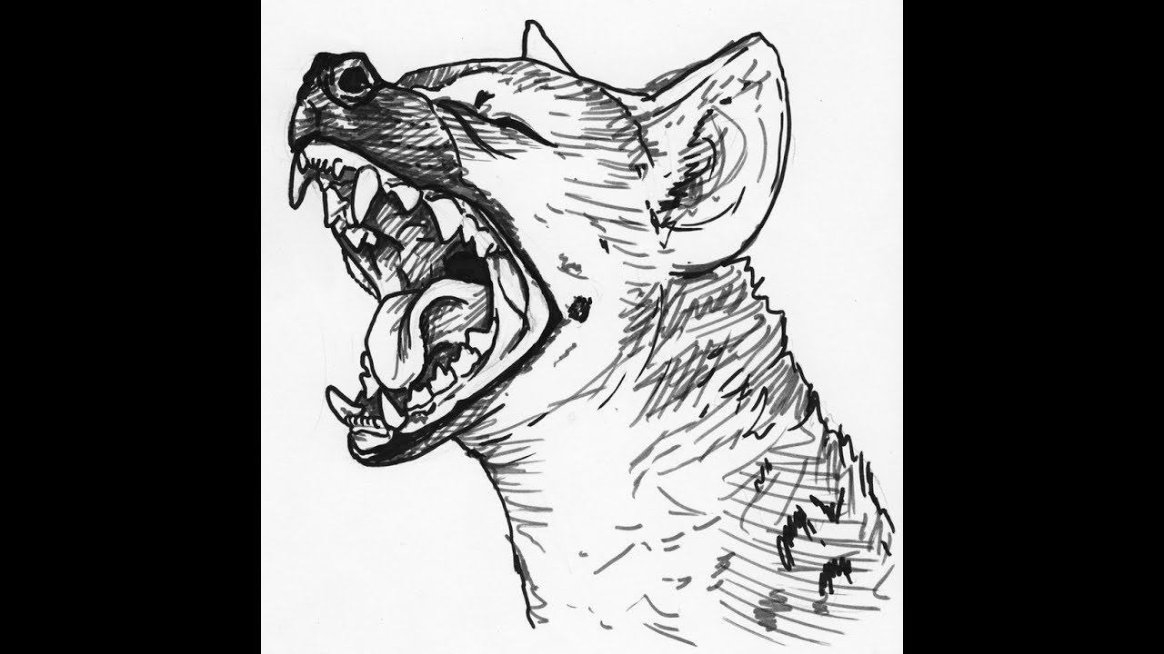how to draw a spotted hyena spotted hyena drawing at paintingvalleycom explore how draw a to spotted hyena