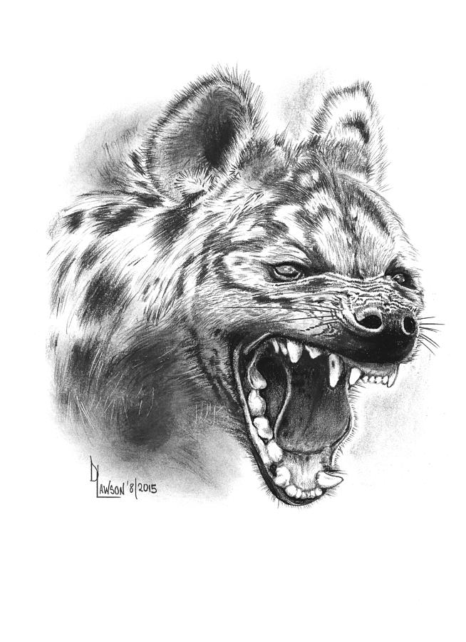 how to draw a spotted hyena spotted hyena drawing by dave lawson to how hyena a spotted draw