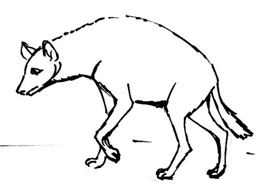 how to draw a spotted hyena spotted hyena drawing free download on clipartmag hyena to a draw how spotted