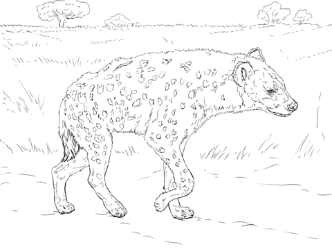 how to draw a spotted hyena spotted hyena walking in the savannah coloring page from hyena spotted draw how to a