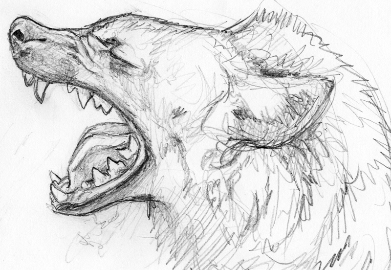 how to draw a spotted hyena spotted hyena yawn sketch by silvercrossfox on deviantart hyena to spotted how a draw
