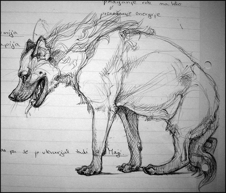 how to draw a spotted hyena study notes sketches hyena by theurbanfox animal draw how to spotted hyena a