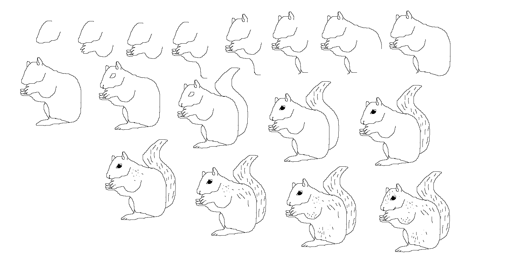 how to draw a squirrel 1000 images about squirrel anatomy on pinterest squirrel draw a to how