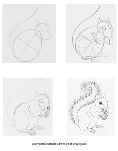 how to draw a squirrel 284 best images about squirrels sketches on pinterest squirrel draw a how to
