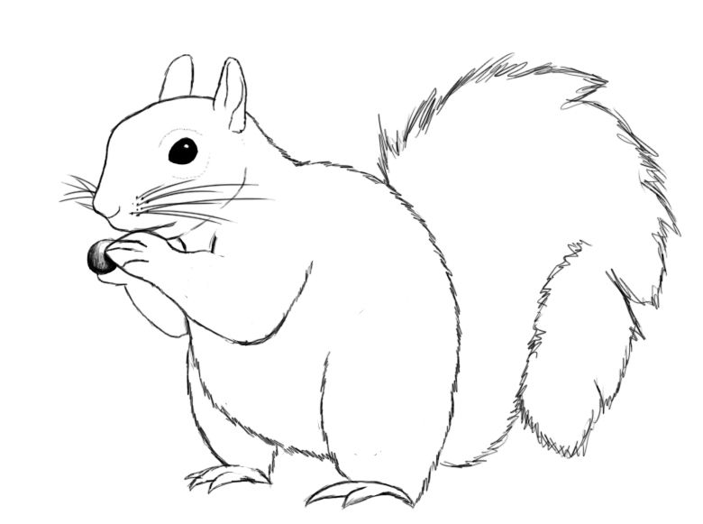 how to draw a squirrel cartoon2draw how to draw cartoon squirrel step by step a draw squirrel to how