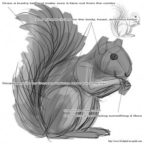 how to draw a squirrel how to draw a squirrel from the side view tutorial a to draw how squirrel