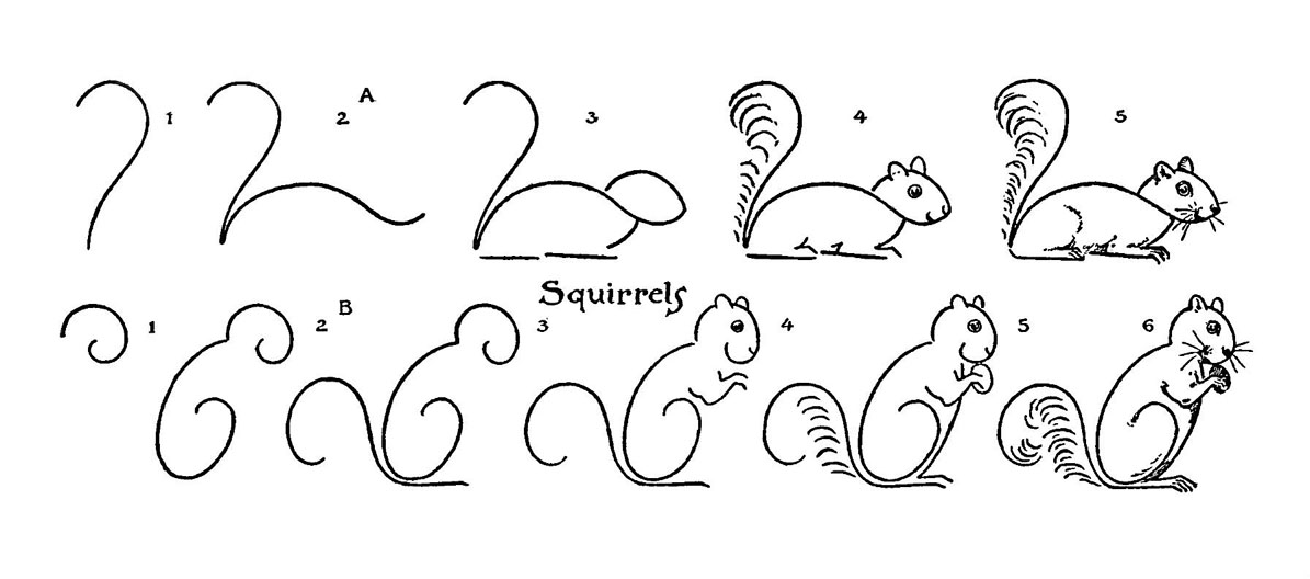 how to draw a squirrel how to draw a squirrel step by step drawing for kids how draw squirrel a to