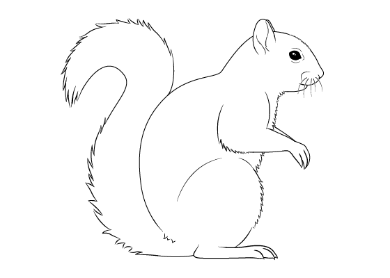 how to draw a squirrel how to draw cartoon squirrels in simple steps drawing to squirrel a draw how