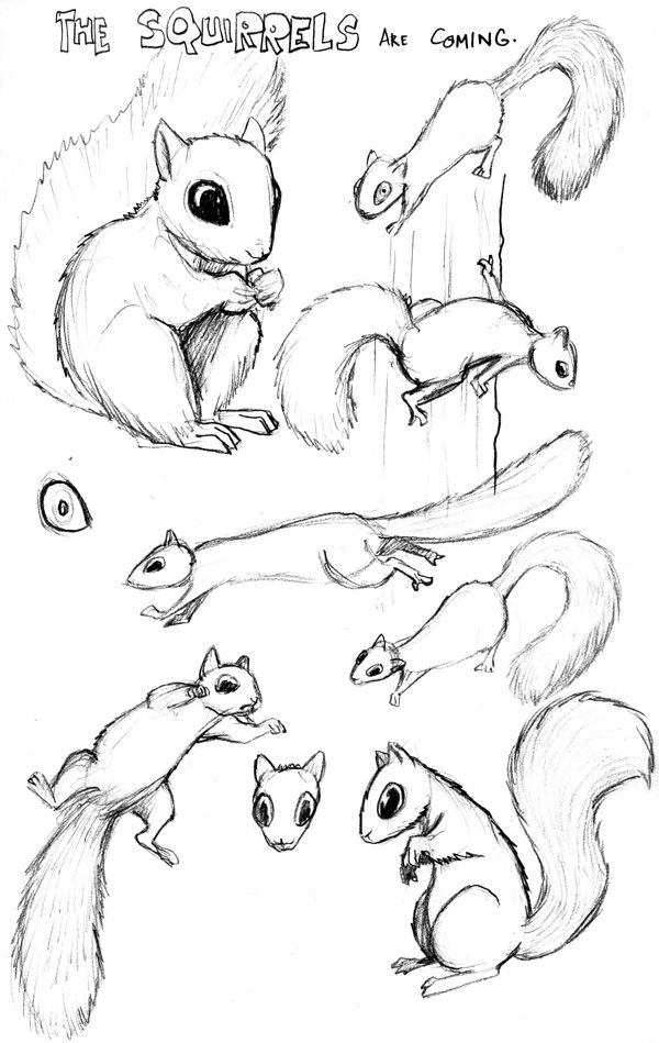 how to draw a squirrel squirrel squirrel illustration animal sketches draw a to squirrel how