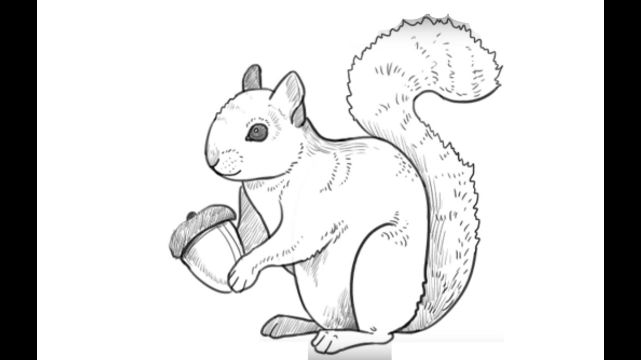 how to draw a squirrel squirrels on pinterest silk painting good morning and a squirrel to how draw