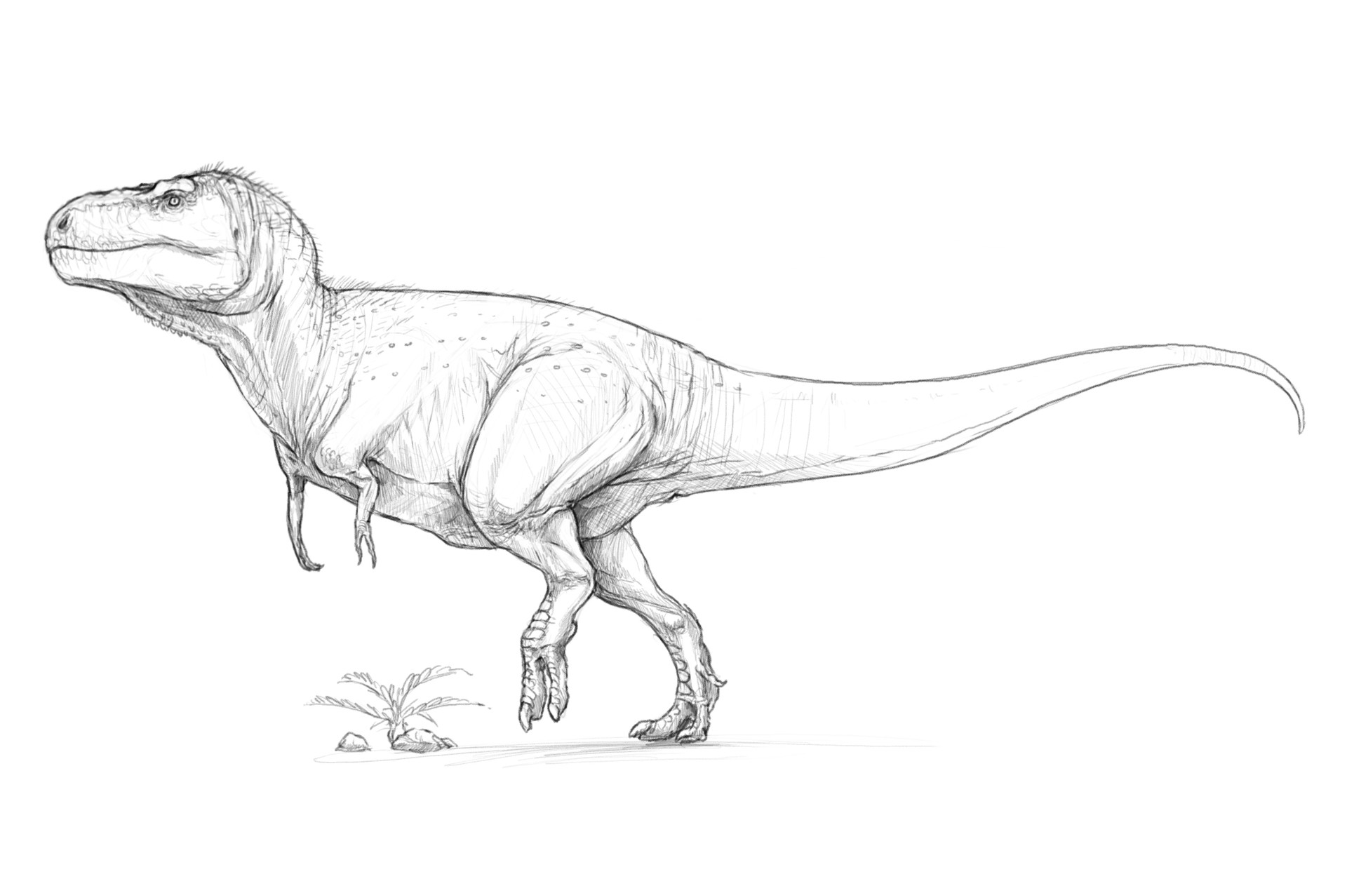 how to draw a t rex how to draw a tyrannosaurus rex t rex youtube how rex a t draw to