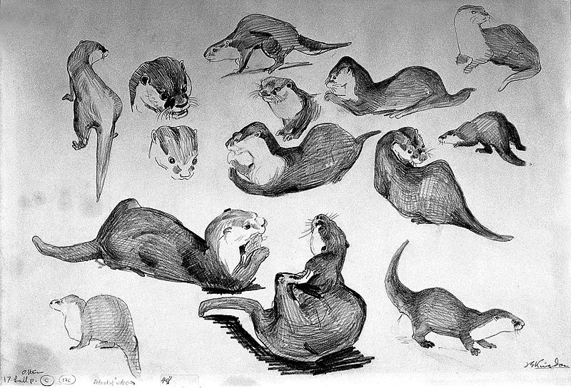 how to draw an otter how to draw an otter draw otter how to an