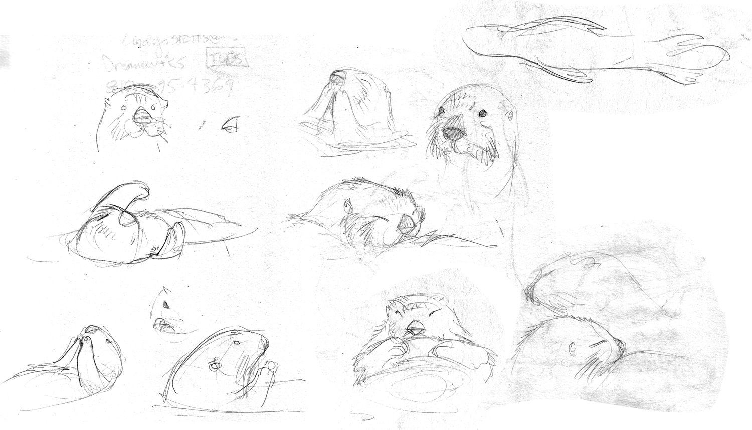 how to draw an otter how to draw an otter drawingforallnet otter an draw to how