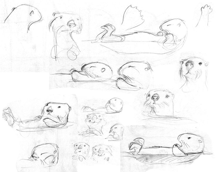 how to draw an otter how to draw an otter youtube draw otter an how to