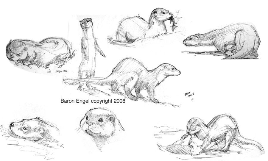 how to draw an otter pix for gt cute sea otter drawing ollie the otter otter how an to draw
