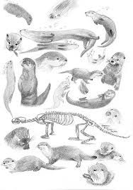 how to draw an otter templates animal coloring pages otter drawing drawings otter to draw an how