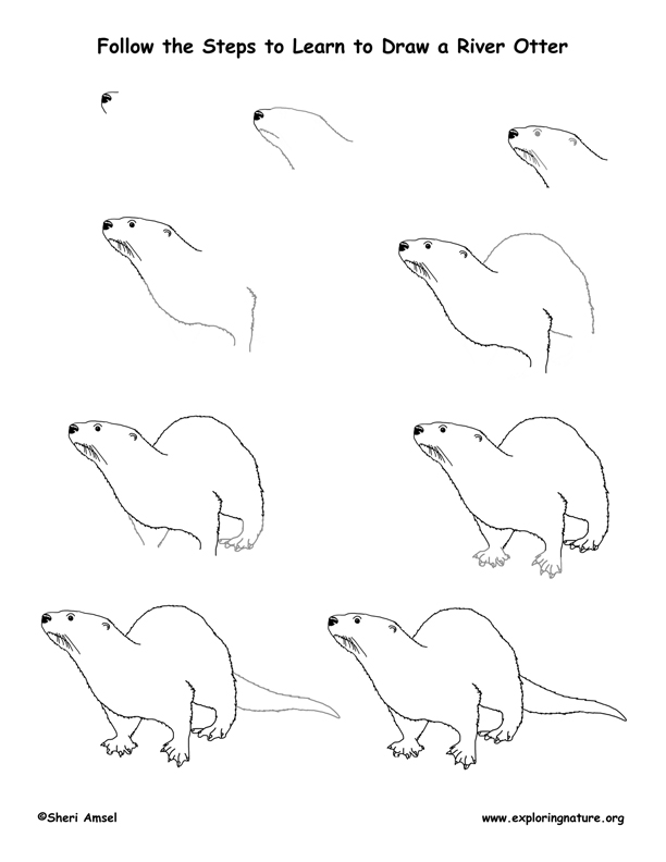 how to draw an otter the otter coloring download the otter coloring for free 2019 an how draw to otter