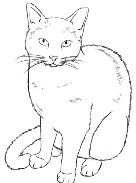 how to draw anime cats anime cat ears drawing at getdrawings free download draw to anime cats how