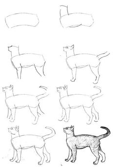 how to draw anime cats how to draw a cute anime cat step by step drawing how draw cats to anime