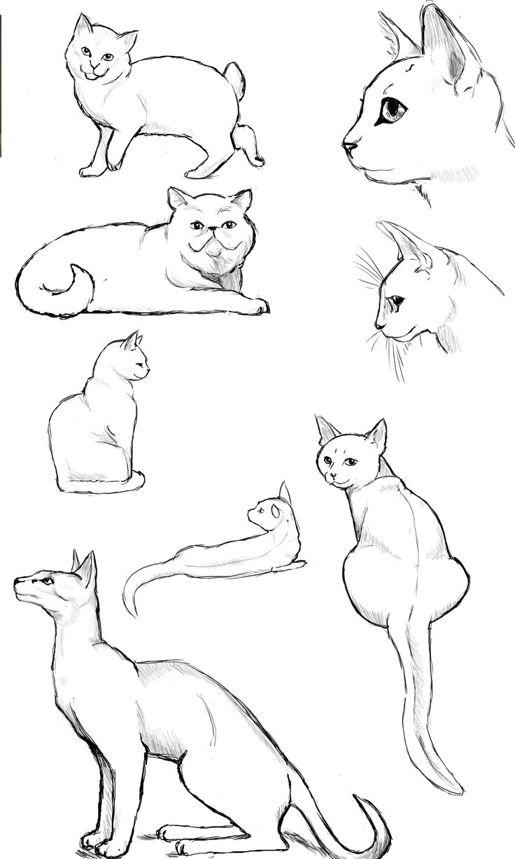 how to draw anime cats pin by velrey lozano on snooge39s stuff kitten drawing cats how draw anime to