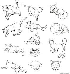 how to draw anime cats the 25 best cat drawing ideas on pinterest simple cat how cats to anime draw