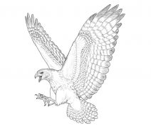 how to draw hawk wings hawk wings drawing at getdrawings free download how draw wings to hawk