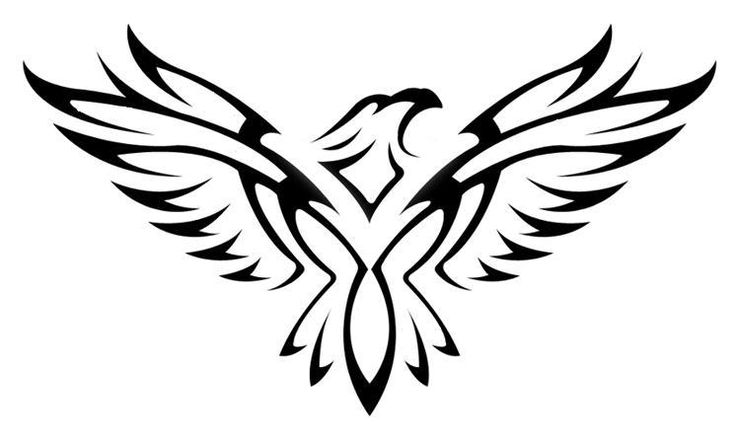 how to draw hawk wings hawk wings drawing free download on clipartmag how wings draw to hawk