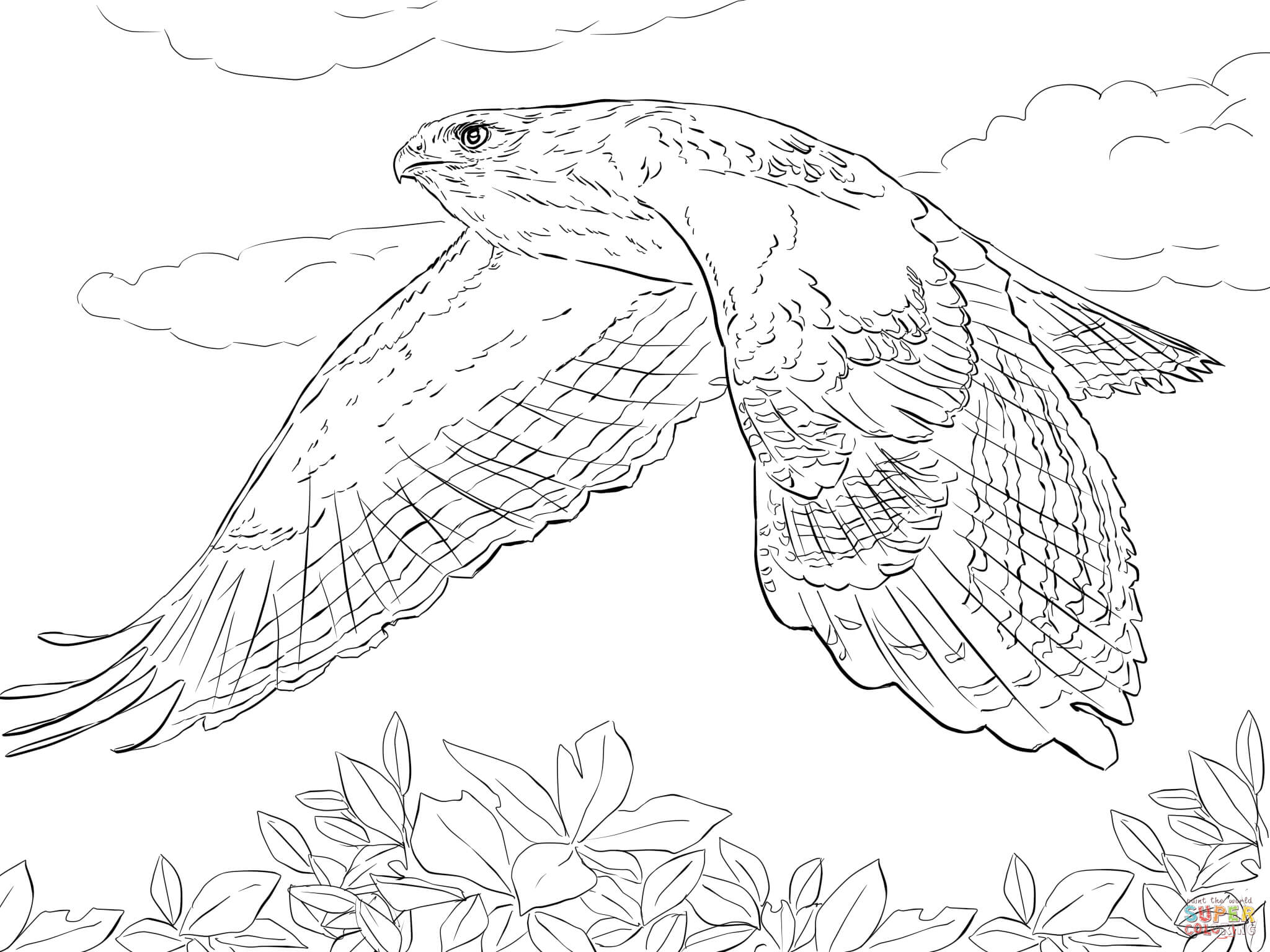how to draw hawk wings hawks coloring pages free coloring pages bird coloring wings draw how to hawk
